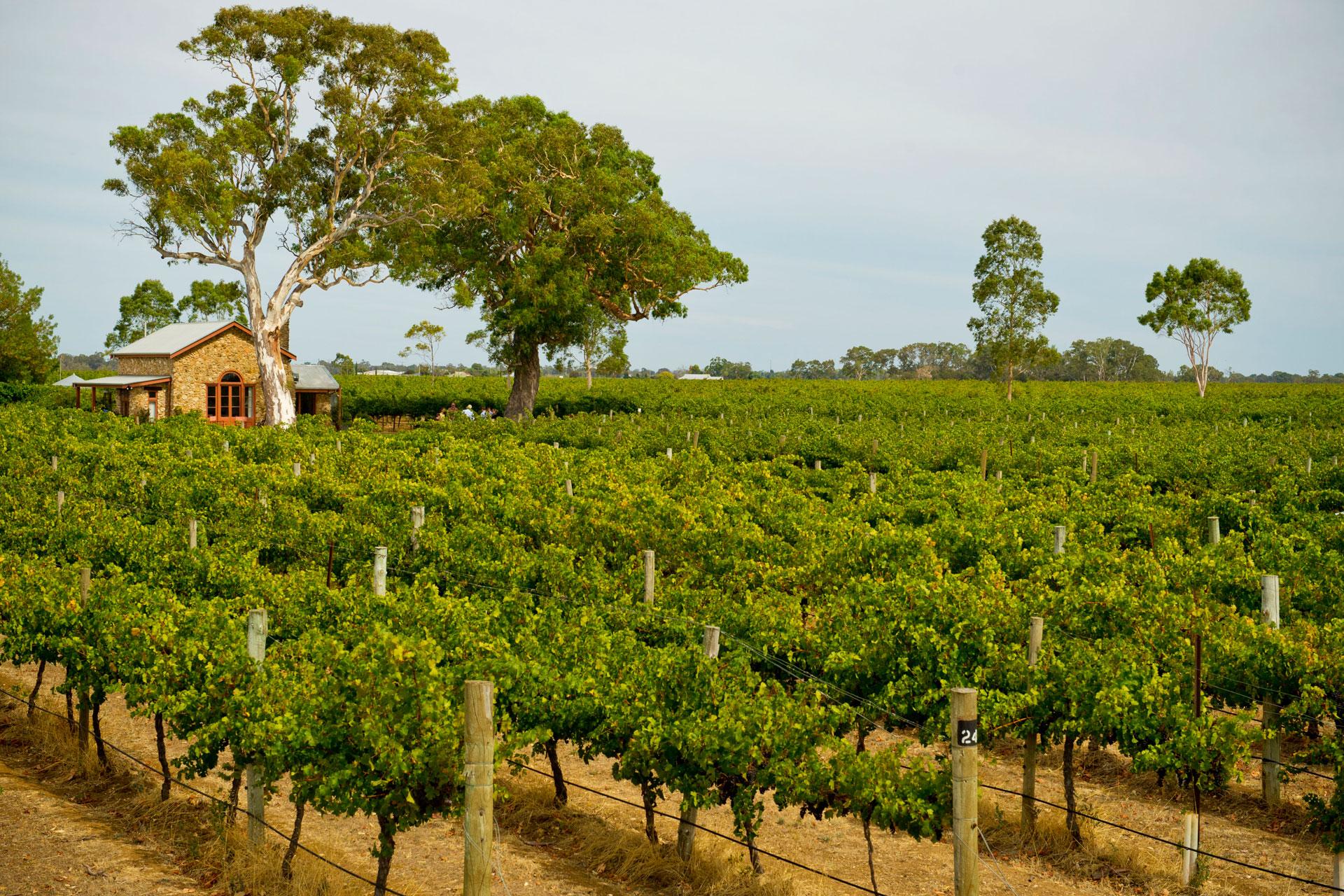 Coonawarra Wine District