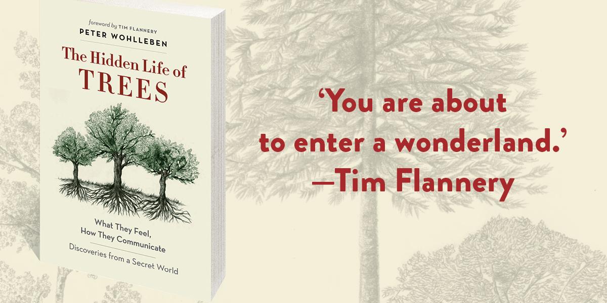 the-hidden-life-of-trees-fb-1200x600