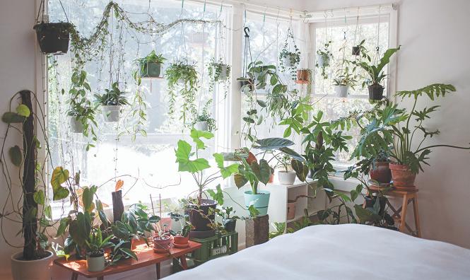 Indoor Jungle - In Post 1