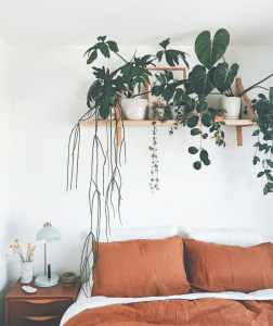 Indoor Jungle - 3